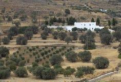 European farm. Olive farm in lefkes on the island of paros in greece Royalty Free Stock Image