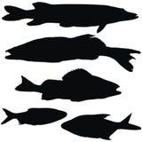 European fishes. Pike, zander, perch, roach, bream, set of black vectoe silhouettes Royalty Free Stock Photo