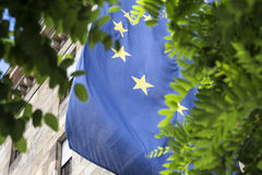 European flag and a tree. The european flag and a tree Royalty Free Stock Photos