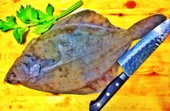European flounder fish Royalty Free Stock Image