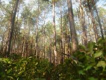 European forest Royalty Free Stock Photo