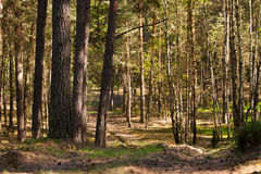 European forest Royalty Free Stock Image