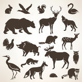 European forrest wild animals collection Stock Photos