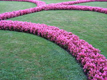 European garden with pink flowers. Detail of a well manicured garden and lawn with pink flowers Royalty Free Stock Photography