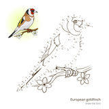 European goldfinch bird learn to draw vector Royalty Free Stock Photo