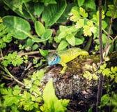 European green lizard is basking on the wood Stock Image