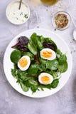 European green mix salad Royalty Free Stock Image