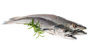 European hake Stock Images