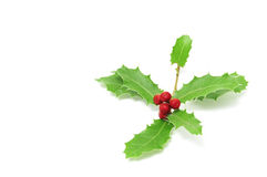European Holly Stock Photography