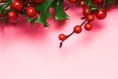 European holly Stock Images