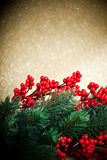 European holly anf fir-tree Stock Images