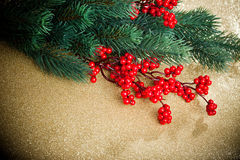 European holly and fir-tree Royalty Free Stock Image