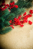 European holly and fir-tree Stock Image