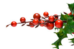 European holly isolated Royalty Free Stock Photos