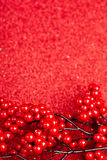European holly on red background Stock Images