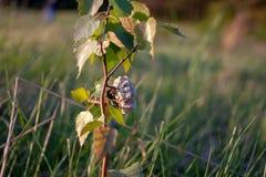 European hornet busy building a hornet`s nest stock images