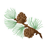 European Larch. Hand Drawn  Cones, Needles and Bough of Larch Stock Images