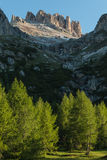 European larch trees in Dolomites Stock Image