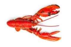 European lobster Stock Photo