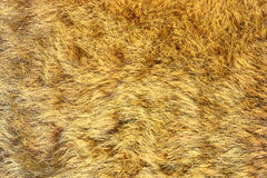 European lynx real pelt. Texture of big cat leather Stock Photo