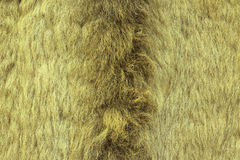 European lynx textured fur Royalty Free Stock Photos