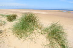 European marram gras Royalty Free Stock Photo