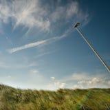 European marram grass Stock Photography