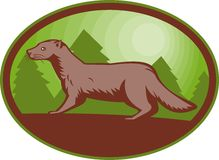 European mink side view Stock Images