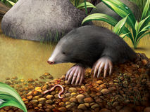 European Mole in molehill, Talpa europaea. Stock Images