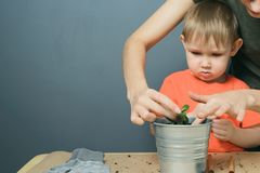 European mother and little blond son replant money tree plant in metal flower pot on table. European mother and little blond child son replant money tree plant stock photography