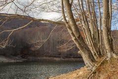 European mountain lake and trees Royalty Free Stock Photo