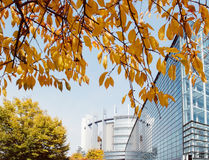 European Parliament in Strasbourg. STRASBOURG, FRANCE - OCTOBER 30, 2015: European Parliament office glass building seen through yellow leaf tree on a warm day Stock Photo
