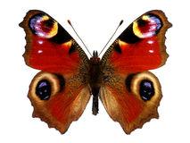 European Peacock butterfly (Inachis io) Stock Photos