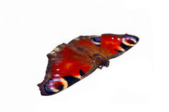 European peacock butterfly Stock Image