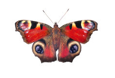 European peacock butterfly, isolated on white Stock Photography