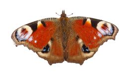 European Peacock butterfly isolated on white background. Top view Stock Photography