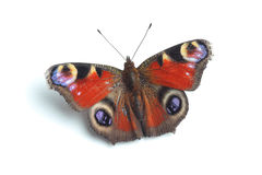 European Peacock (Inachis io)  isolated on white Royalty Free Stock Image