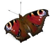 Free European Peacock Moth, Inachis Io Royalty Free Stock Image - 22843996