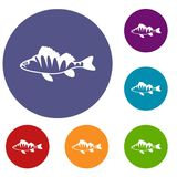 European perch, Perca fluviatilis icons set. In flat circle reb, blue and green color for web Royalty Free Stock Images