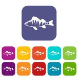 European perch, Perca fluviatilis icons set. Vector illustration in flat style in colors red, blue, green, and other Stock Images