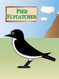 European pied flycatcher Royalty Free Stock Photography