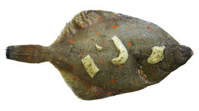 European Plaice Fish. Fresh European Flounder Plaice Fish with herbs and Butter Royalty Free Stock Image
