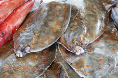 European plaices in a fish-shop. Fresh European plaices in a fish-shop Royalty Free Stock Photography