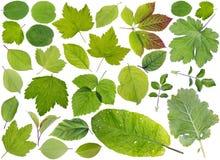 European plants leaves set Stock Photo