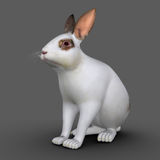 European rabbit (Cuniculus) Royalty Free Stock Photography