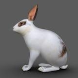 European rabbit (Cuniculus) Stock Image