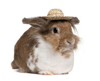 European Rabbit wearing a straw hat Royalty Free Stock Photography