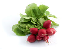 European radish Stock Photography