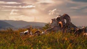 European ram skull in grass. Close view royalty free stock photos