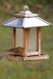 European Robin / Erithacus rubecula at a bird feeder Royalty Free Stock Photos